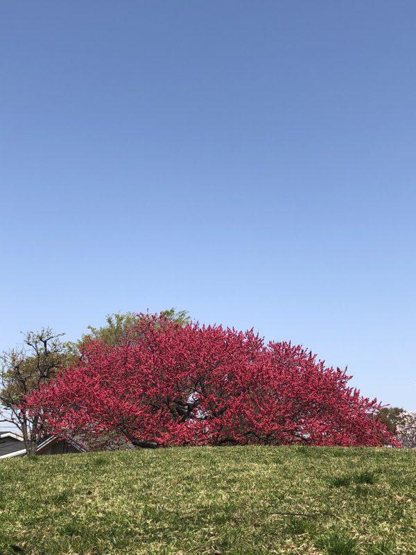 草花が咲き乱れる「春」