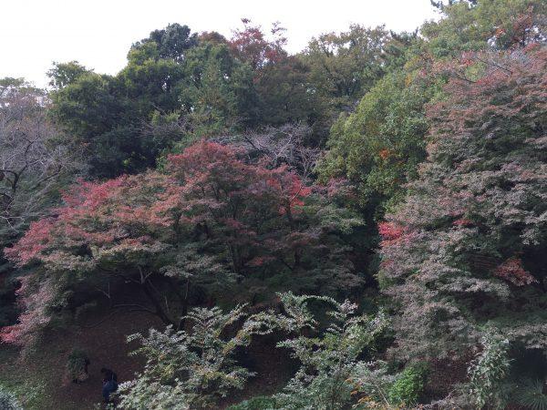 秋の紅葉の京都