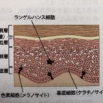 生きてる細胞に働きかけるのが本当のエステティック(エステ・フェイシャル基本理論)