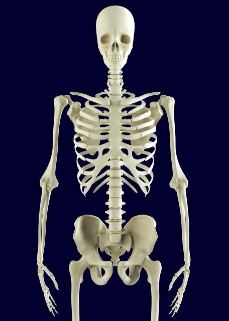 人体解剖生理