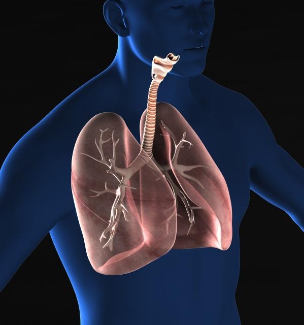 解剖生理学 呼吸器系