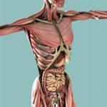 エステ解剖生理学~人体のしくみ