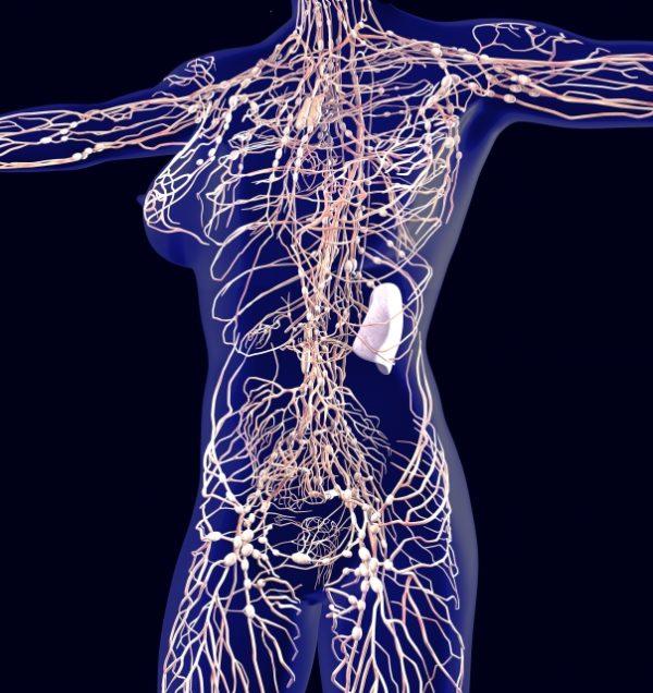 リンパ管のイメージ