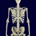 エステ解剖生理学~骨格系