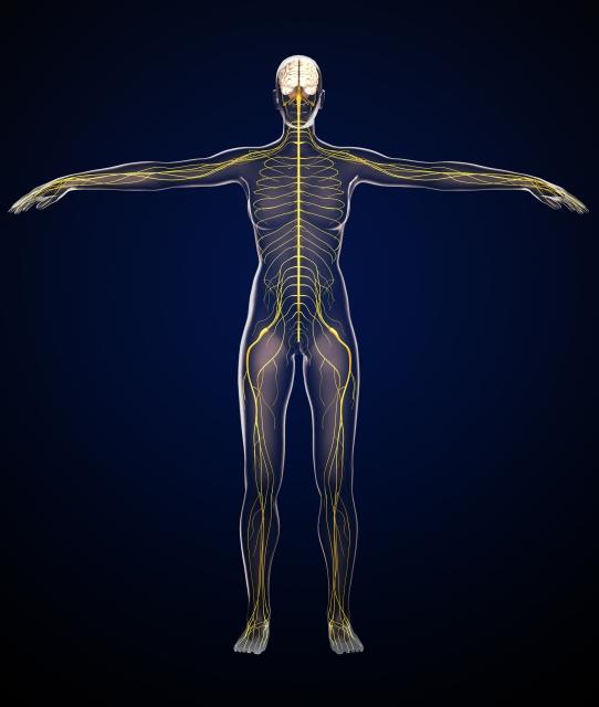 解剖生理学~神経系