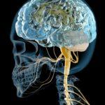 エステ解剖生理学~神経系Ⅱ