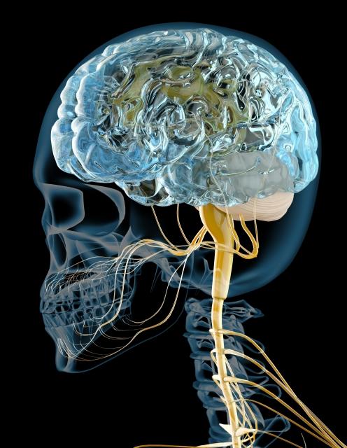 解剖生理学神経系